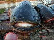 Рыбалка в Астрахани!!!Вперёд за трофеями
