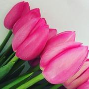 Тюльпаны к 8 марта от производителя в воронеже